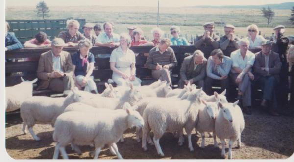 Forsinard sheep sale (1984)