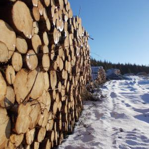 LOGS IN SNOW PAUL STAGG